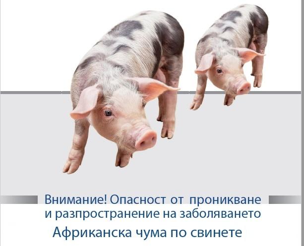 Инвентаризация (регистрация) на всички свине, отглеждани в лични стопанства на територията на общината, ферма тип заден двор