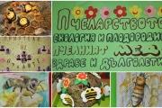 Мед и грамоти получиха отличените в Общинския конкурс за пчеларството